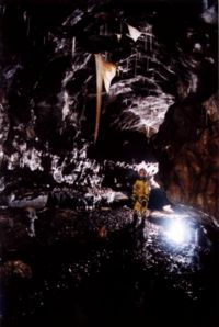 Wookey admires a huge stalactite (in Curry Inlet again, I think). Photo: Mark Shinwell